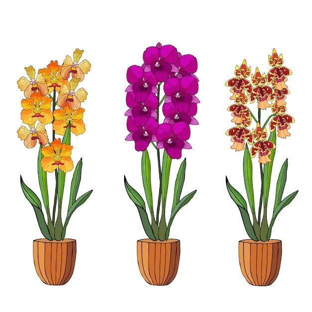 Ensemble dessiné d'orchidées en pots de fleurs à la main. Vecteur Premium