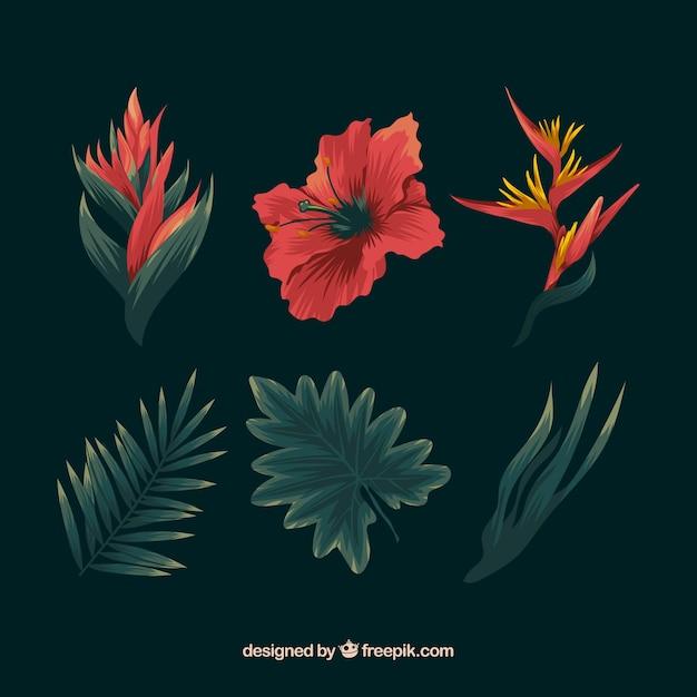 Ensemble de dessinés à la main de fleurs tropicales colorées Vecteur gratuit