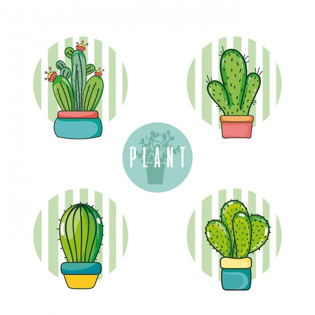 Ensemble de dessins animés de cactus Vecteur Premium