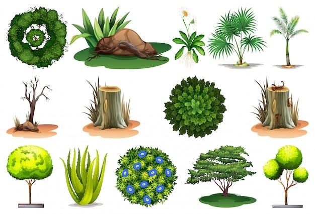 Ensemble de différentes plantes Vecteur Premium