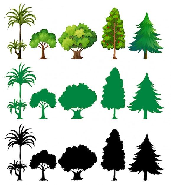 Ensemble de différents arbres Vecteur gratuit