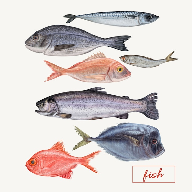Ensemble de différents poissons détaillés Vecteur Premium