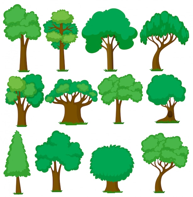 Ensemble de divers arbres Vecteur gratuit
