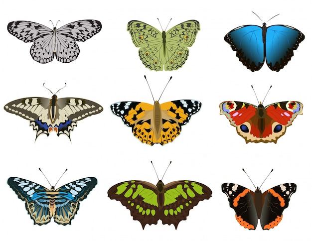 Ensemble de divers types de papillons colorés sur fond blanc Vecteur Premium