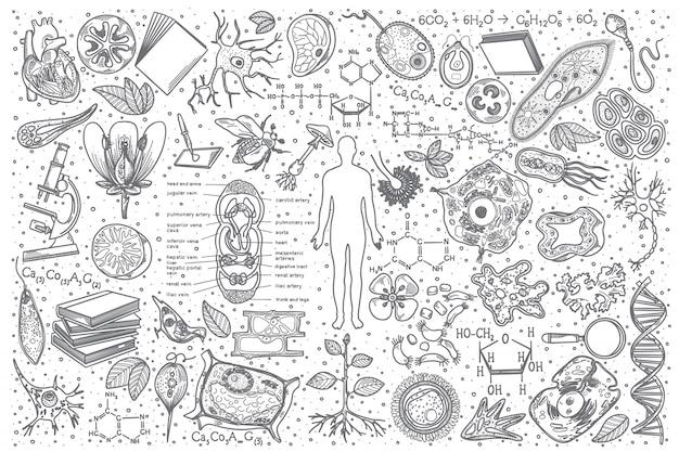Ensemble De Doodle De Biologie Dessiné à La Main Vecteur Premium