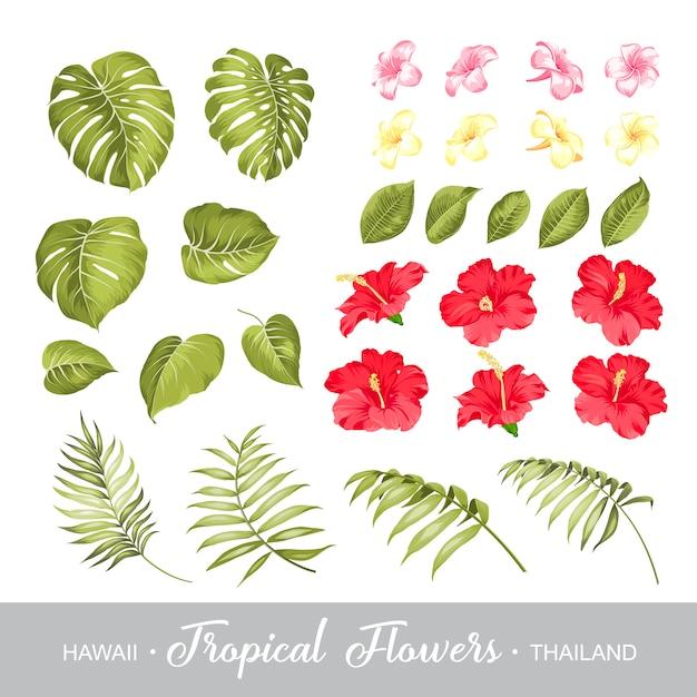 Ensemble d'éléments de fleurs tropicales. Vecteur Premium