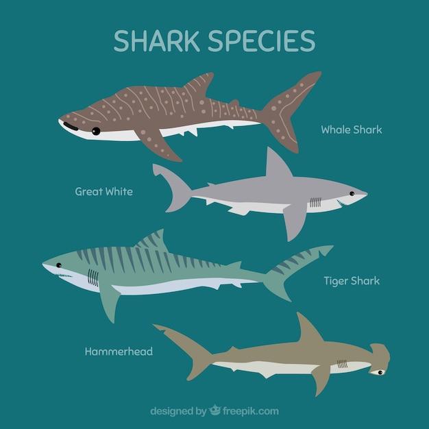 Ensemble d'espèces de requins dans un style plat Vecteur gratuit