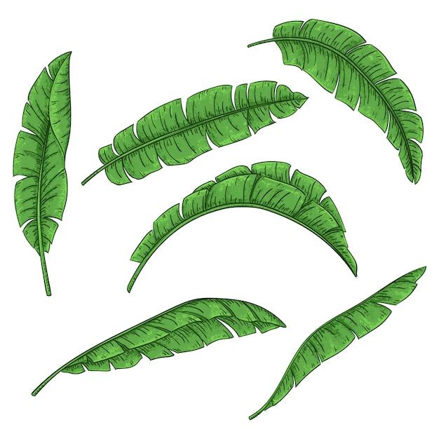 Ensemble de feuilles de palmier tropical, collection de feuilles de bananier de la jungle Vecteur Premium