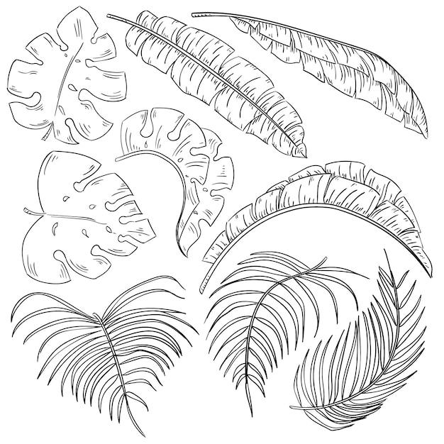 Ensemble de feuilles de plantes tropicales isolé sur blanc Vecteur Premium