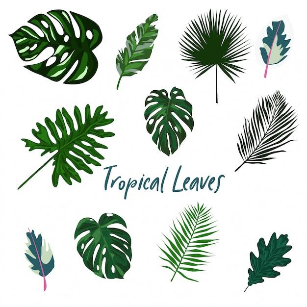 Ensemble de feuilles tropicales isolé Vecteur Premium
