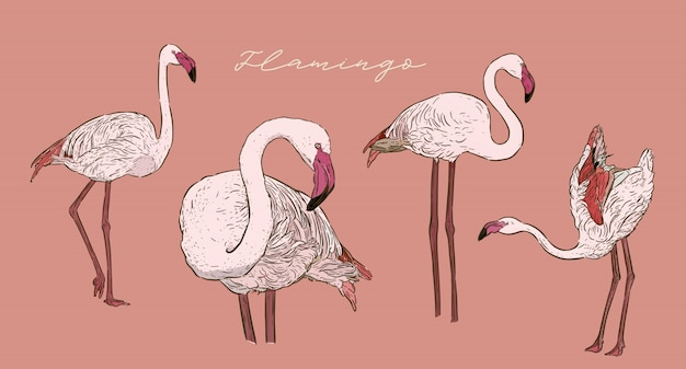 Ensemble de flamingo, vecteur de croquis dessiner main. Vecteur Premium