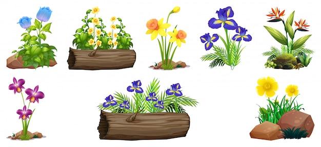 Ensemble de fleurs colorées sur les rochers et le bois Vecteur gratuit
