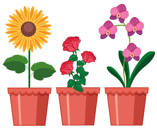Un ensemble de fleurs dans un pot Vecteur gratuit
