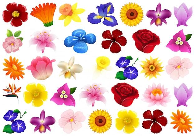 Ensemble De Fleurs Différentes Vecteur gratuit