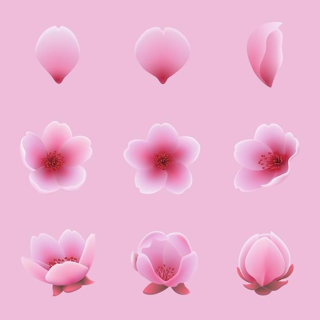 Ensemble de fleurs de sakura de fleurs de cerisier et de fleurs pétales Vecteur Premium