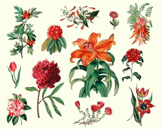 Ensemble de fleurs vintage Vecteur gratuit