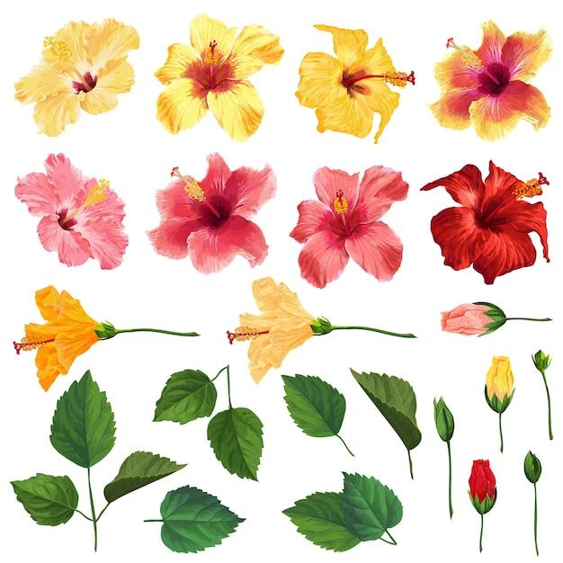 Ensemble floral d'hibiscus avec des fleurs, des feuilles et des branches. aquarelle dessinée à la main Vecteur Premium