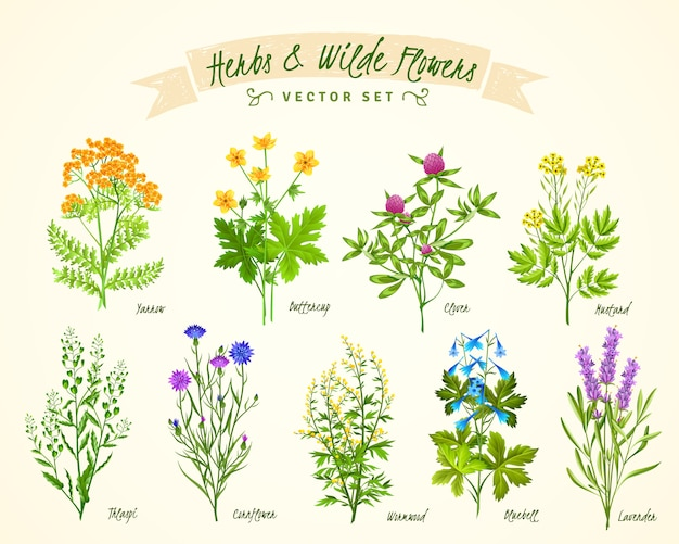 Ensemble de fond herbes et fleurs sauvages Vecteur gratuit