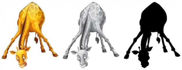 Ensemble de girafe Vecteur gratuit