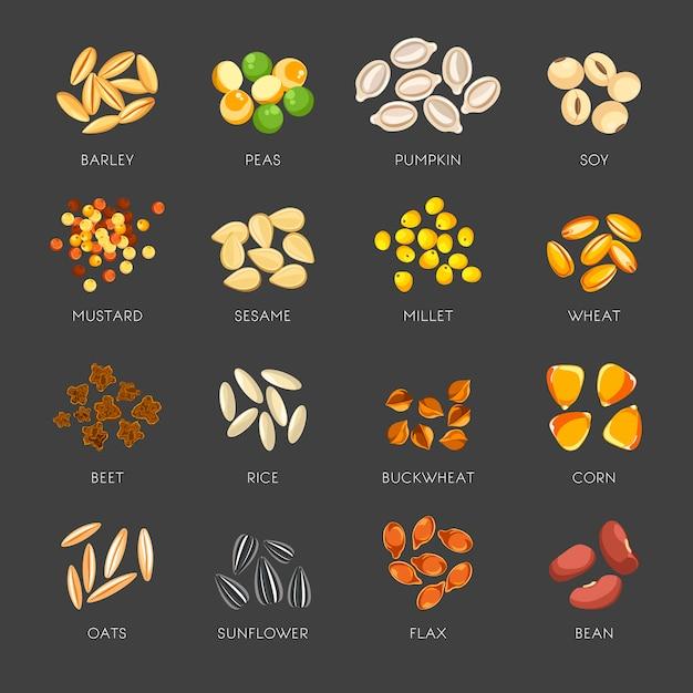 Ensemble de graines de plantes naturelles en petits tas Vecteur Premium
