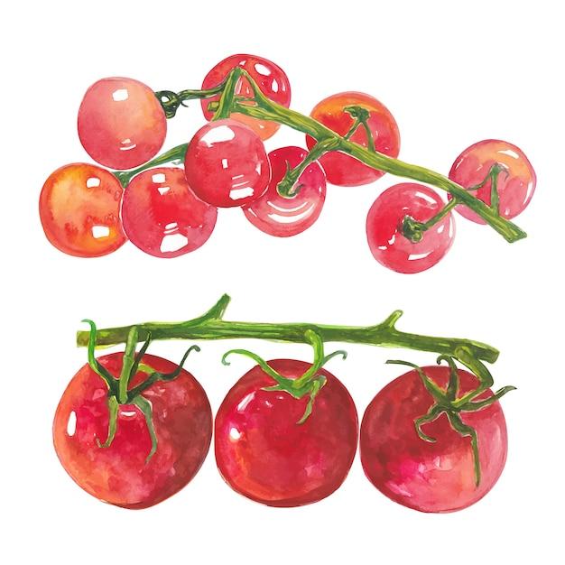 Ensemble de groupe d'élément artistique tomates aquarelle rouge Vecteur Premium