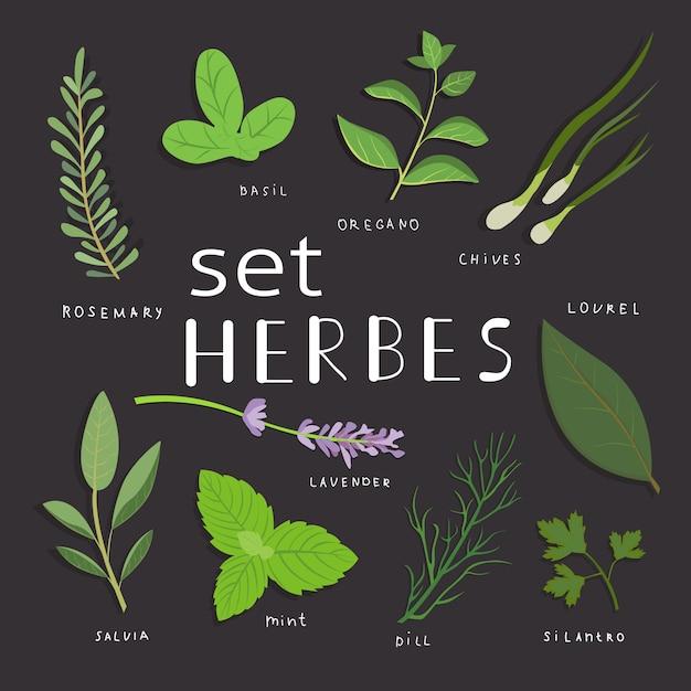 Ensemble D'herbes Aromatiques. Ensemble D'herbes Et D'épices Fraîches. Illustration Vectorielle. Vecteur Premium