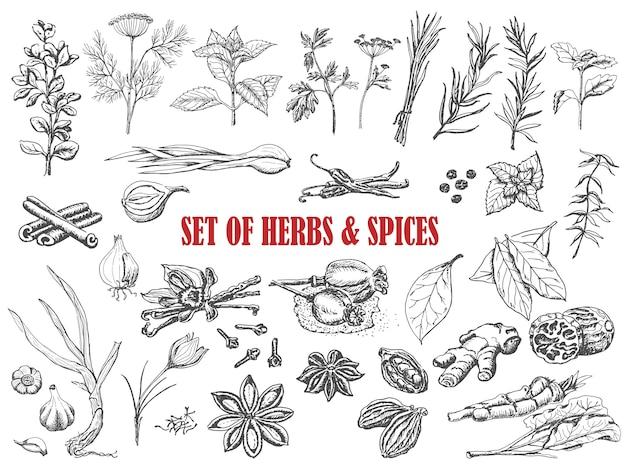 Ensemble d'herbes et d'épices dans le style de croquis Vecteur Premium