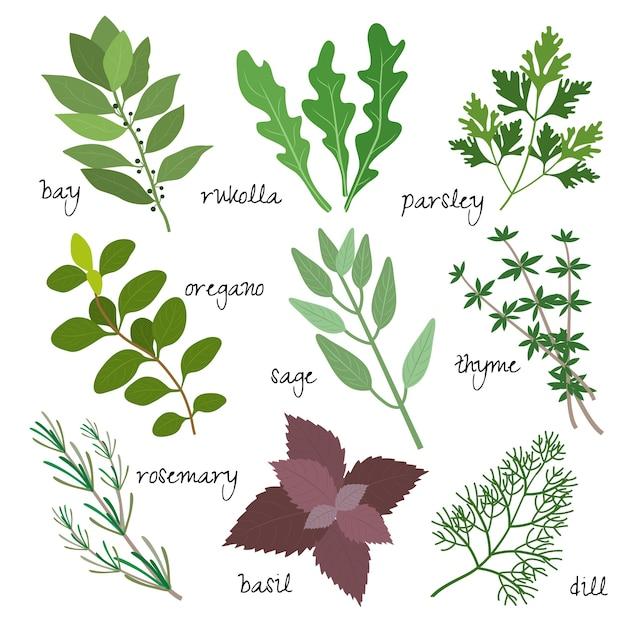Ensemble D'herbes Médicinales, Médicinales Et Parfumées Vecteur gratuit