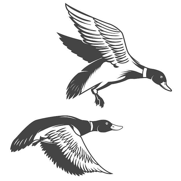 Ensemble D'icônes De Canards Sauvages Sur Fond Blanc. éléments Pour Logo, étiquette, Emblème, Signe, Marque. Vecteur Premium