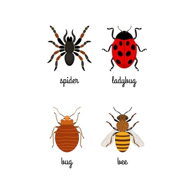 Ensemble d'icônes plat coloré insectes Vecteur Premium