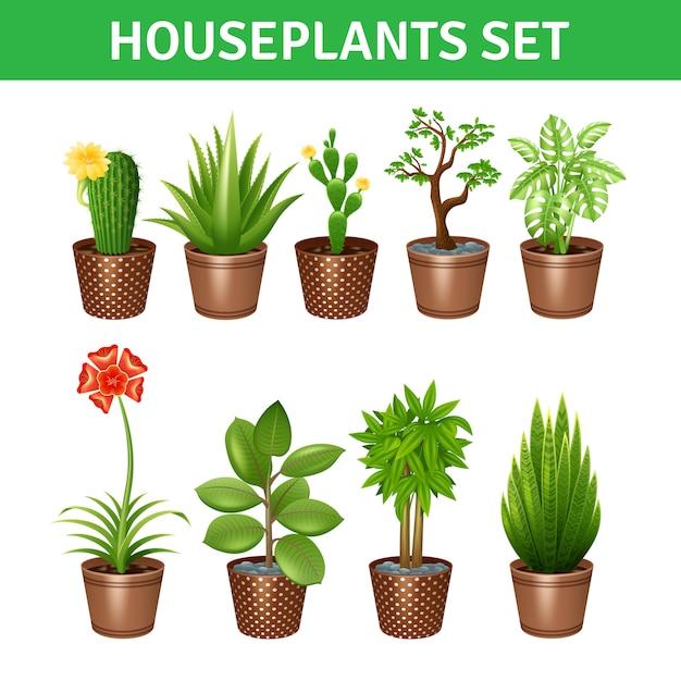 Ensemble d'icônes réalistes de plantes d'intérieur Vecteur gratuit
