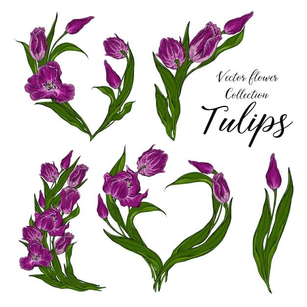 Ensemble d'image de vecteur avec des tulipes à fleurs rose foncé floral. Vecteur Premium