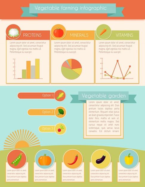 Ensemble Infographique De Légumes Vecteur gratuit