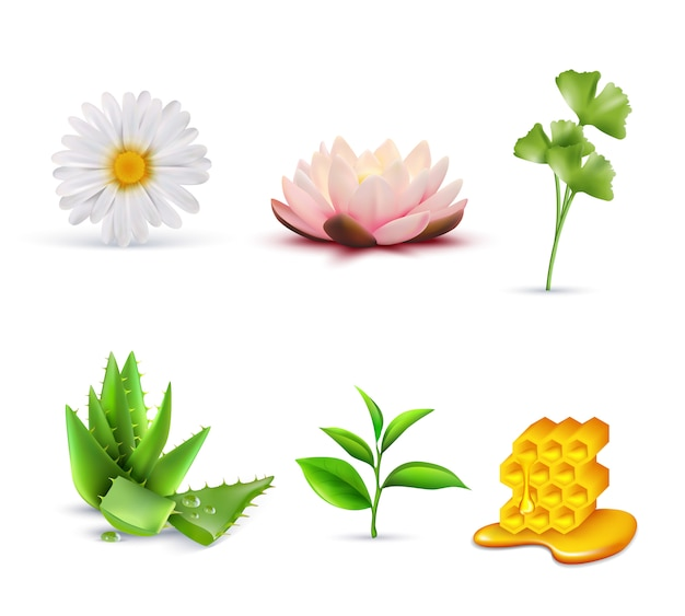 Ensemble d'ingrédients cosmétiques biologiques Vecteur gratuit