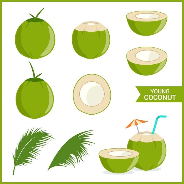 Ensemble de jeune noix de coco fraîche Vecteur Premium