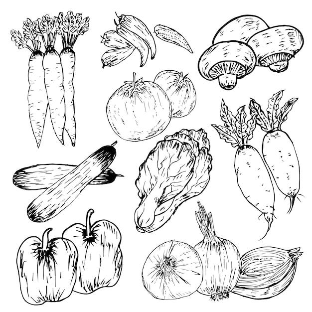 Ensemble de légumes dessinés à la main, herbes biologiques et épices, dessins de la nourriture saine définie. Vecteur Premium