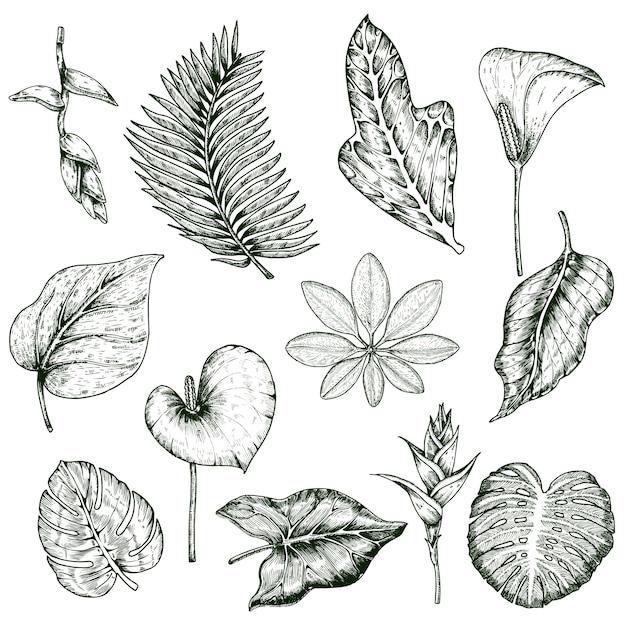 Ensemble Monochrome De Plantes Tropicales Dessinées à La Main Vecteur gratuit