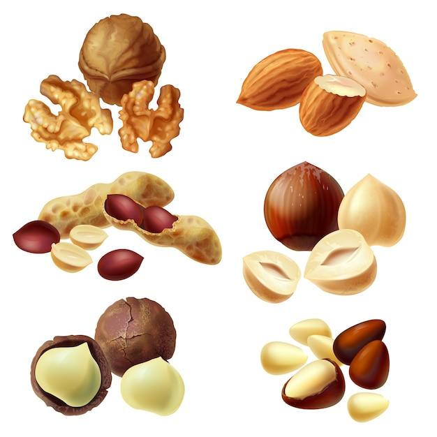 Ensemble de noix diverses, noisette, macadamia, arachide, amande, noix, noix de pin Vecteur Premium