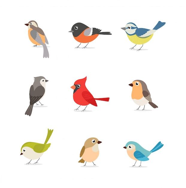 Ensemble d'oiseaux colorés isolé sur blanc Vecteur Premium