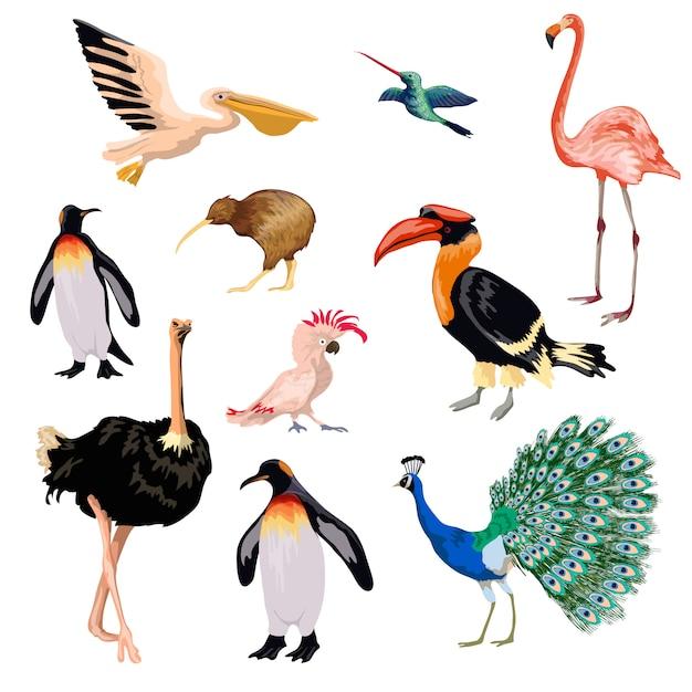 Ensemble d'oiseaux exotiques Vecteur gratuit