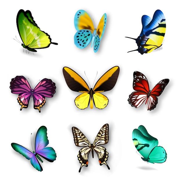 Ensemble papillon réaliste Vecteur gratuit