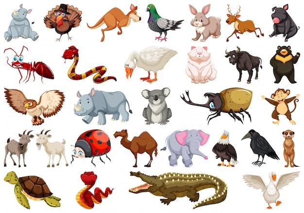 Ensemble de personnage animal Vecteur Premium