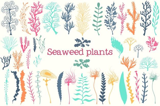 Ensemble De Plantes D'algues Et D'aquarium Vecteur Premium
