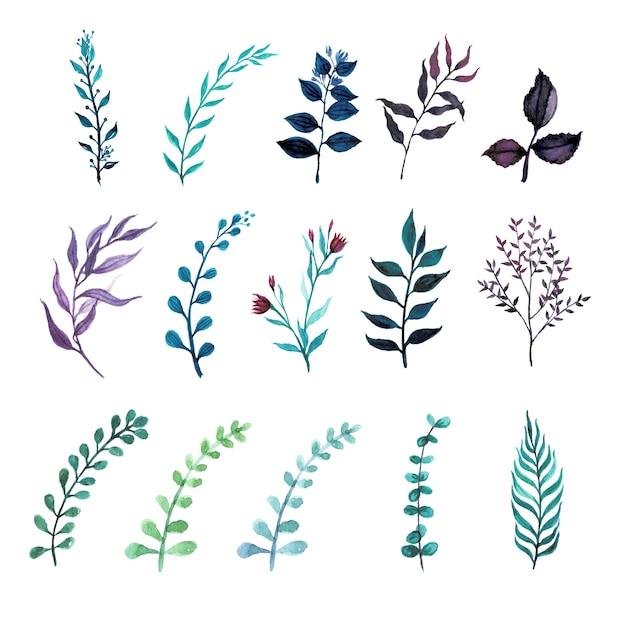 Ensemble De Plantes De Feuilles De Verdure Dans Un Style Aquarelle Vecteur Premium