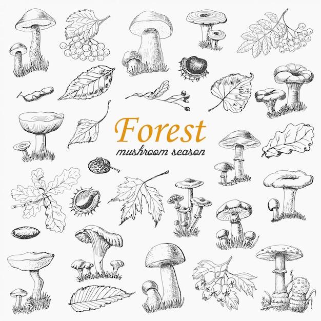 Ensemble De Plantes Forestières Isolées Et Champignons Dans Le Style De Croquis Vecteur Premium