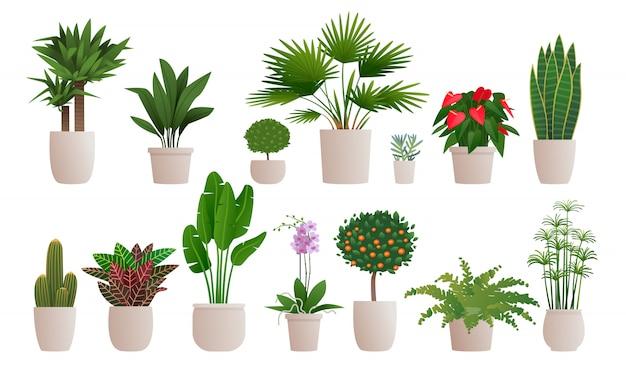 Ensemble De Plantes D'intérieur Décoratives Pour Décorer L'intérieur D'une Maison Ou D'un Appartement. Collection De Diverses Plantes En Pots Vecteur Premium