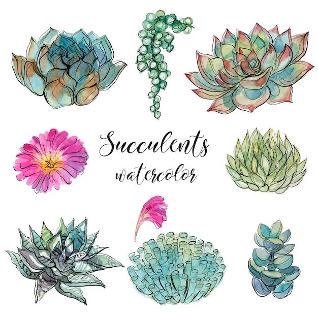 Ensemble de plantes succulentes Vecteur Premium