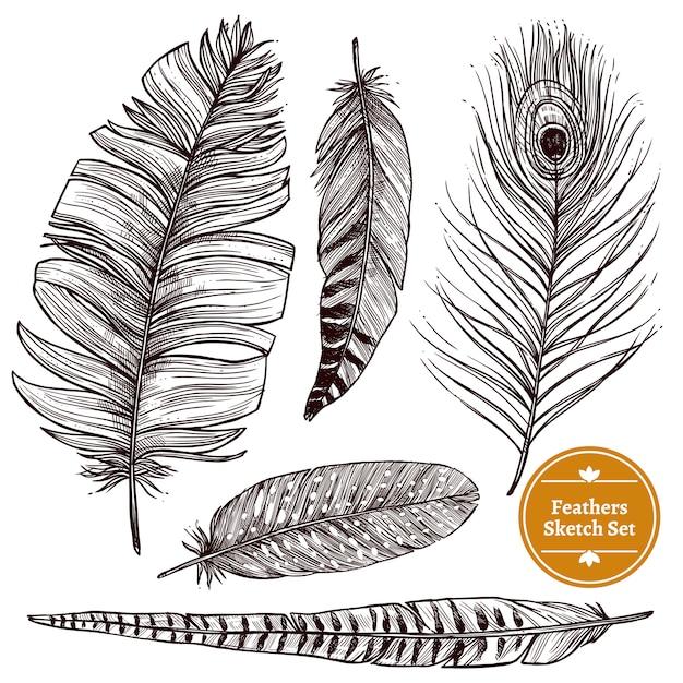 Ensemble de plumes dessinées à la main Vecteur gratuit