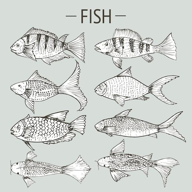 Ensemble de poissons dessinés à la main, jeu de dessins d'aliments sains Vecteur Premium