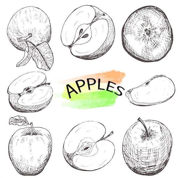 Ensemble de pommes dessinées à la main isolé sur fond blanc. Vecteur Premium
